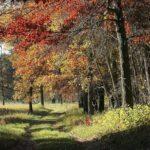 New York Mills - forest